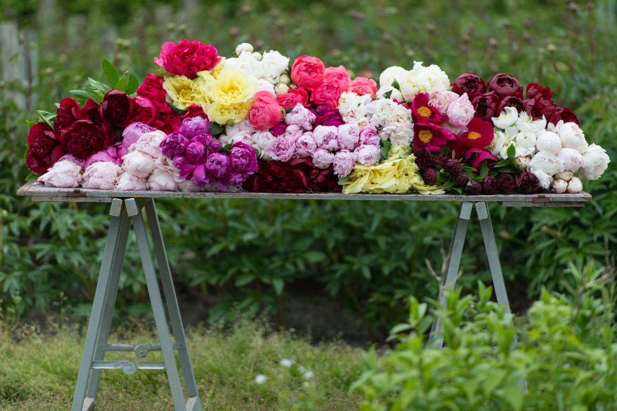 Peonies inspiration from the British Florist Association